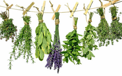 The Essence of Ayurvedic Herbs