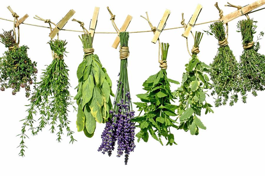 The Essence of Ayurvedic Herbs