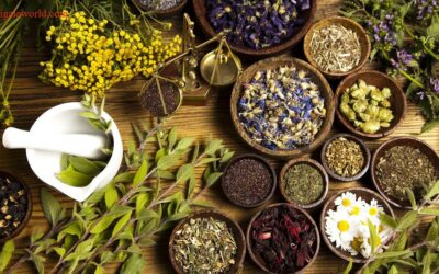 Ayurveda and Holistic Herbology