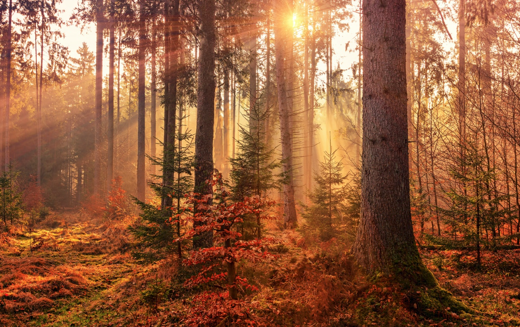 Transitioning into Vata Season (Fall Equinox)