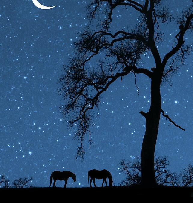 Vedic Astrology: New Moon in Sagittarius, Jan 14