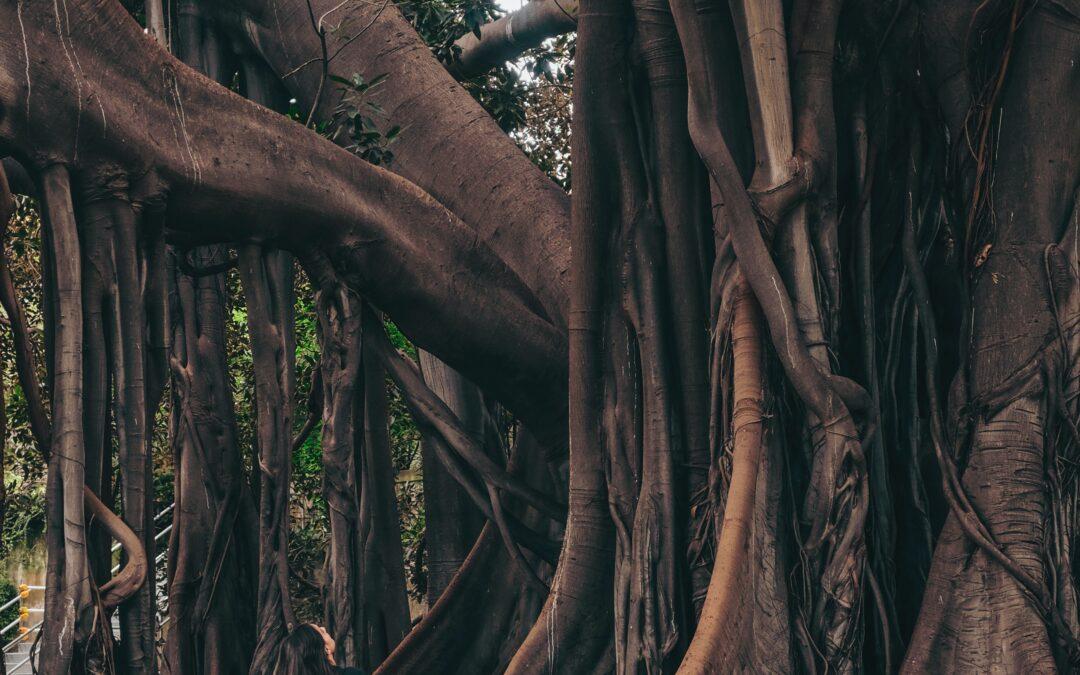 Aligning Chakras – Root Chakra